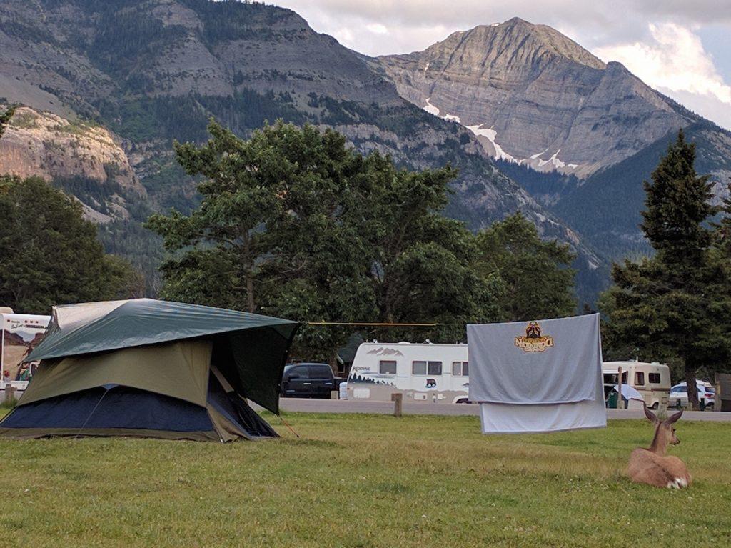 Une biche a installé sa tente à côté de Walter