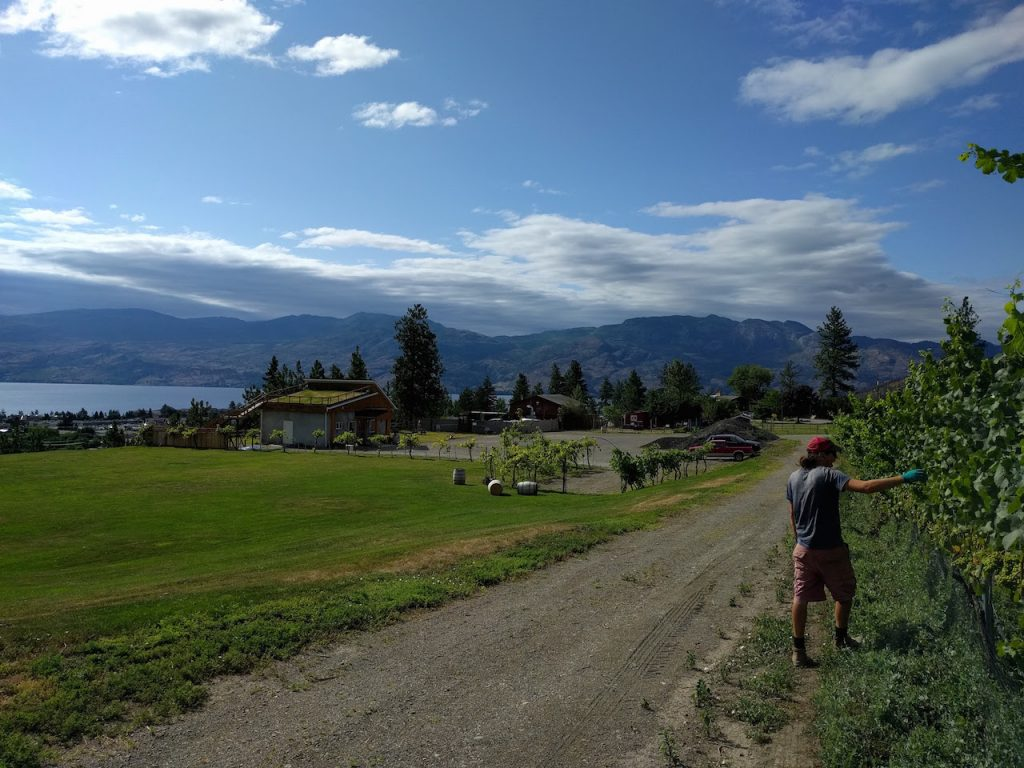 Vue sur le lac Okanagan et Kelowna depuis la Winery