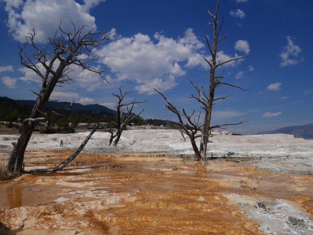 Les arbres rongés par l'acide