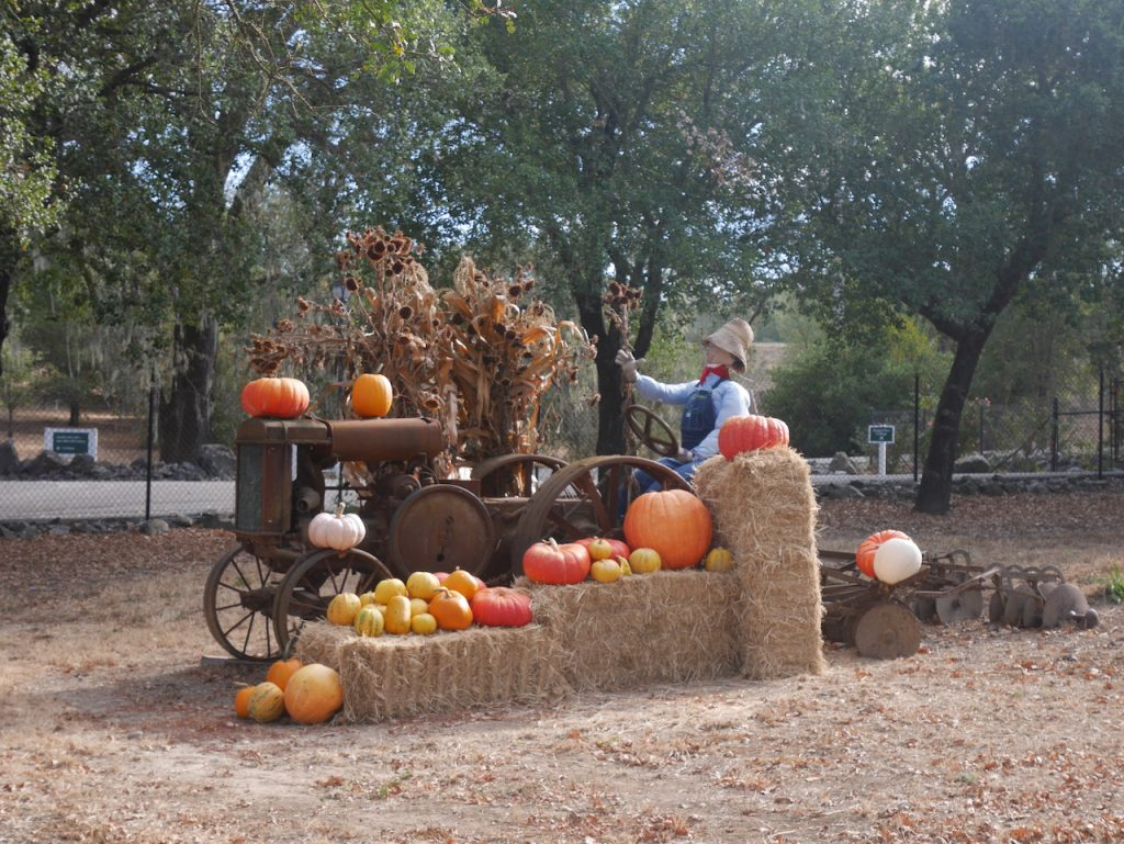 Décoration d'Halloween dans une winery voisine ! Aurélie kiffe, Charles déteste. Jamais d'accord !