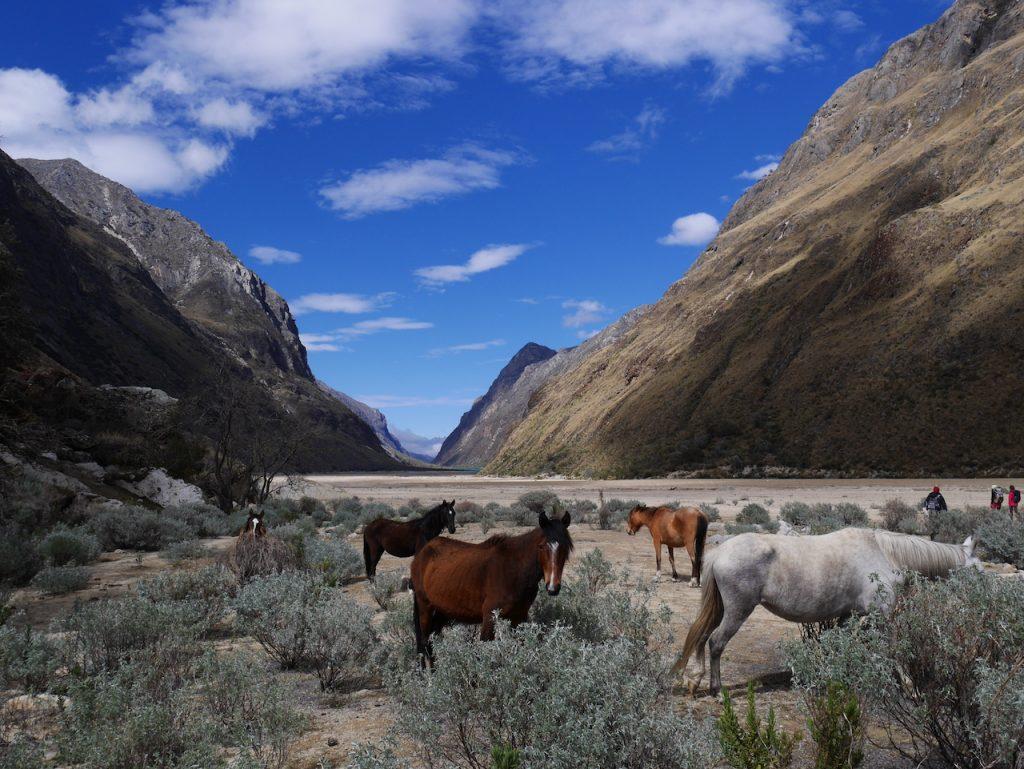 La vallée de Santa cruz et ses chevaux sauvages !