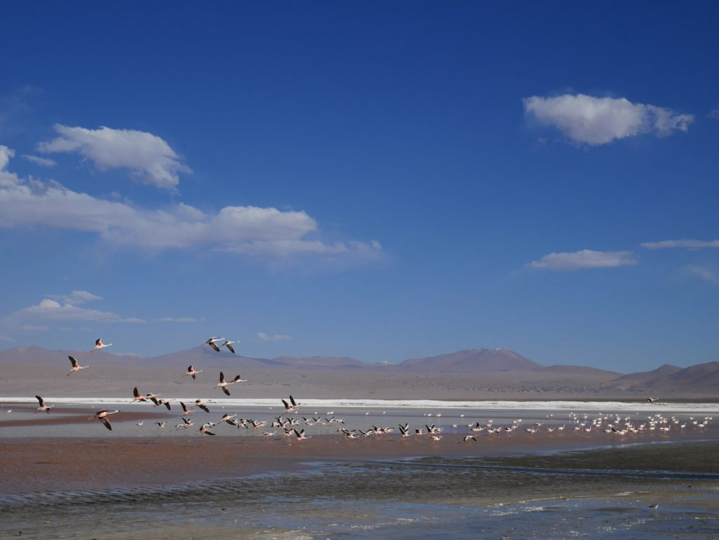 Flamants roses Sud Lipez Laguna Colorada