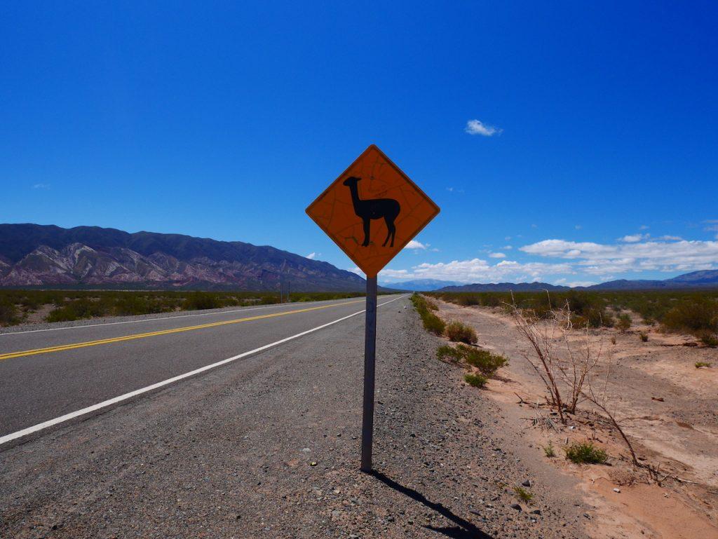 Attention traversée de lamas !