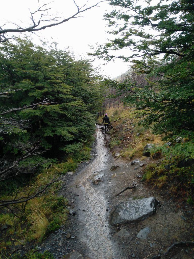 Sentiers vers Campo Italiano Torres del Paine