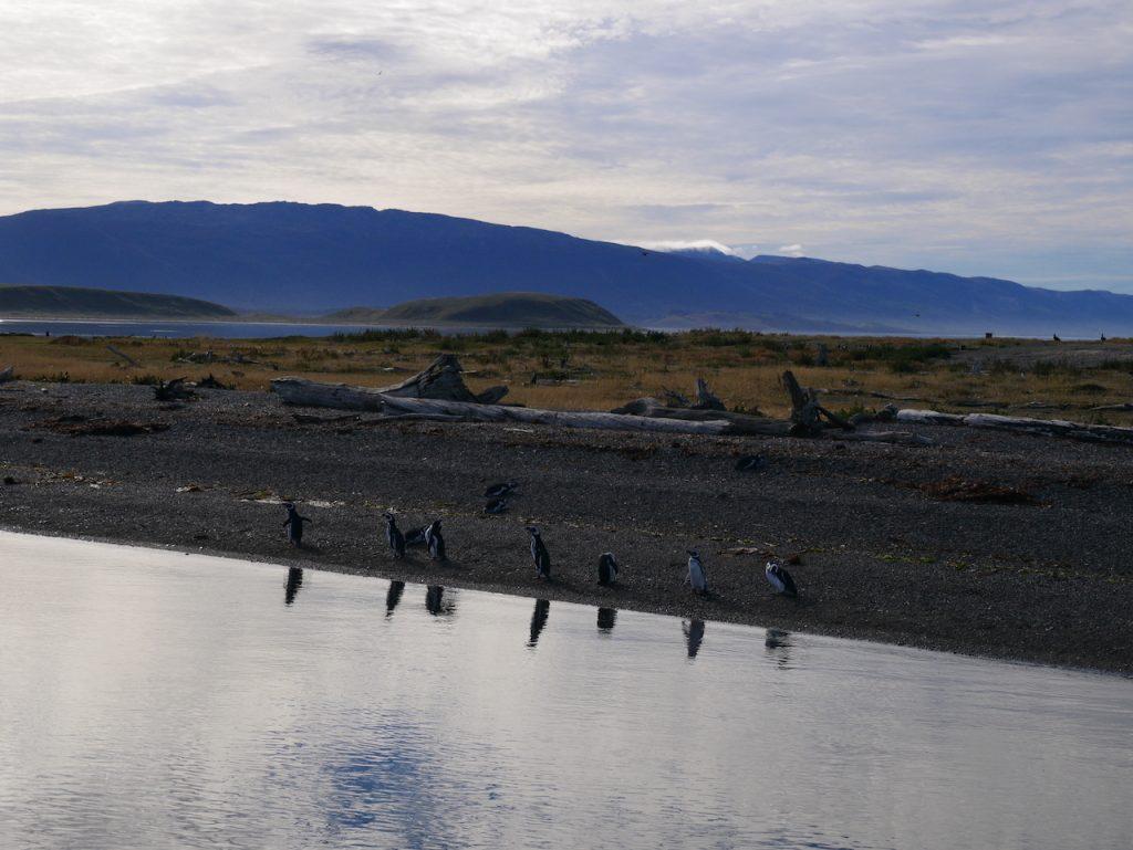 Manchots de Magellan Ushuaïa